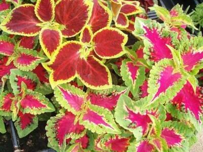 Цветы по гороскопу водолея