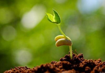 Как правильно замачивать и проращивать семена